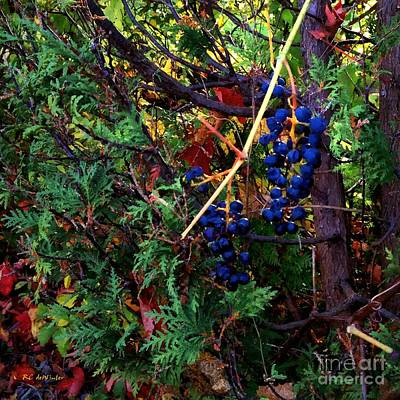Fruit Tree Art Painting - October Potpourri by RC deWinter