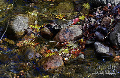 Drawing - October Puddles by Diane E Berry
