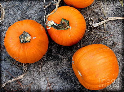 Photograph - October Pumpkins by Colleen Kammerer