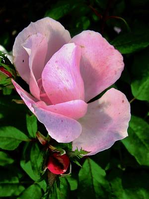 Photograph - October Rose 1 by Stephanie Moore
