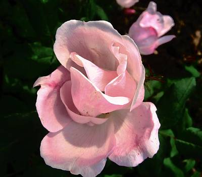 Photograph - October Rose 2 by Stephanie Moore
