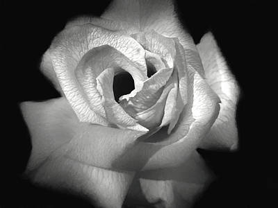 Photograph - October Rose by Donna Kennedy