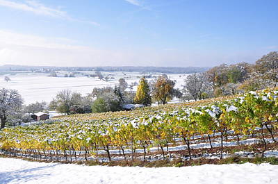 Photograph - October Snow In The Vineyard by Martin Stankewitz