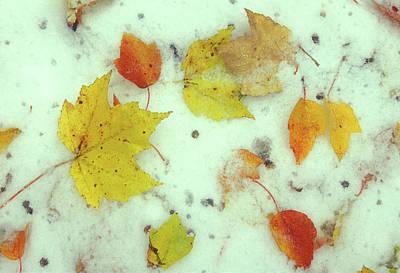 Photograph - October Snow by John Burk