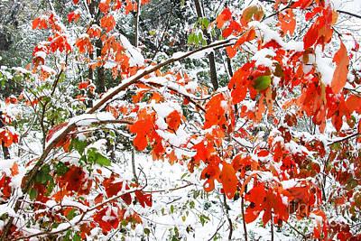 October Snow  Art Print by Thomas R Fletcher