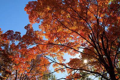Photograph - October Starburst by Steve Stuller