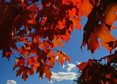Autumn Photograph - October View by Trinket's  Legacy