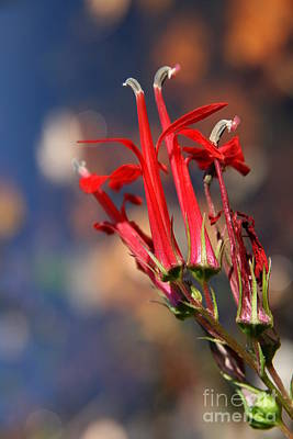 Photograph - October Wildflower  by Neal Eslinger