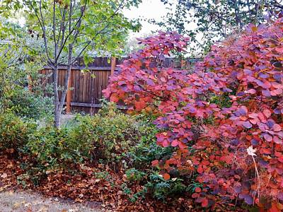 Photograph - October's Burning Bush by VLee Watson