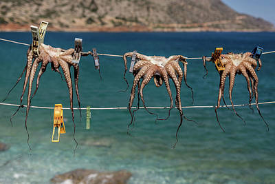 Octopus Photograph - Octopodes Hanging Out by Happy Home Artistry