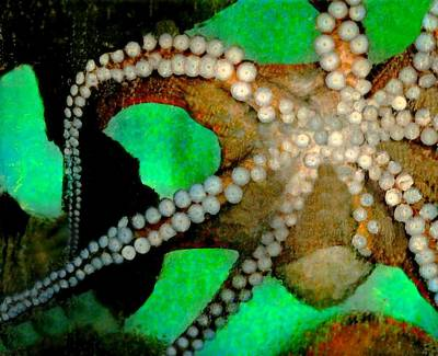 Photograph - Octopus by Diana Angstadt