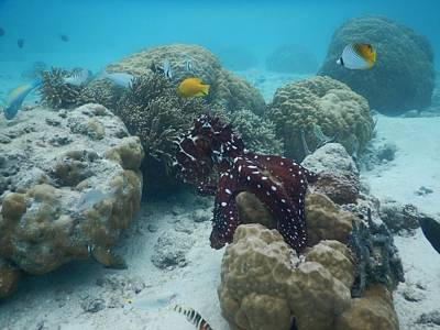Photograph - Octopus Reef 2 by Michael Scott