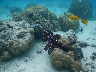 Photograph - Octopus Reef by Michael Scott