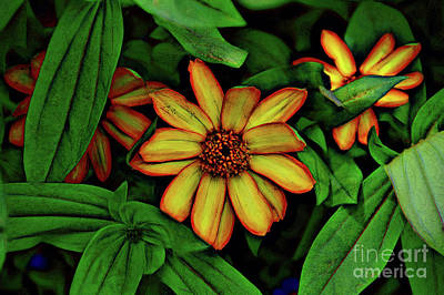 Photograph -  Oculto by Diana Mary Sharpton