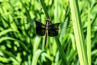 Legs Spread Photograph - Odanate With Wings Spread by Douglas Barnett