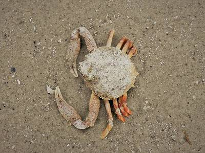 Photograph - Odd Crab by Patricia Greer