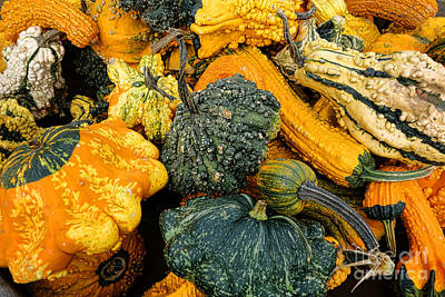 Photograph - Odd Gourds One by Olivier Le Queinec