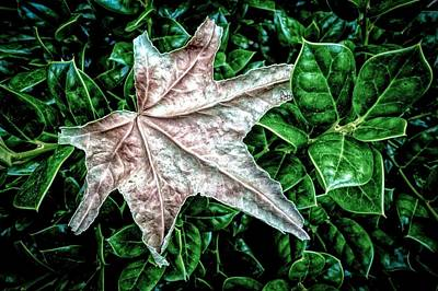 Odd Leaf Original by Ches Black