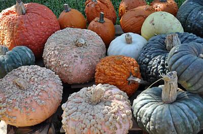 Photograph - Odd Pumpkins by Teresa Blanton