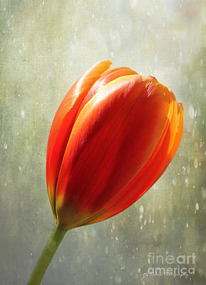 Photograph - Ode To Spring by Nina Silver