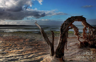 Ode To The Estuary Art Print by Kym Clarke