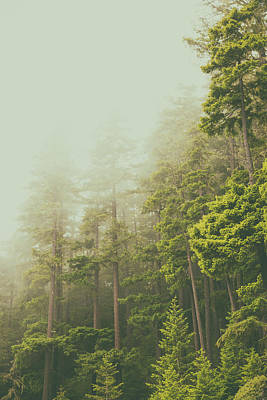 Photograph - Of Fog And Tall Trees by Kunal Mehra