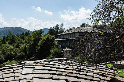 Knobbly Photograph - Of Slate Roofs And Gnarled Apple Trees by Georgia Mizuleva