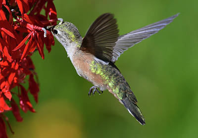 Photograph - Of Wings by Rae Ann  M Garrett