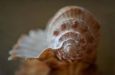 Shell Photograph - Off Shore by Maggie Terlecki