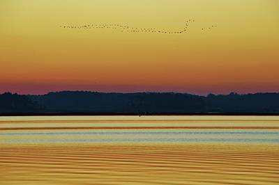Photograph - The Geese Fly South. You Know Summer Is Ending And Autumn Is Upon Us When The Birds Fly South by William Bartholomew