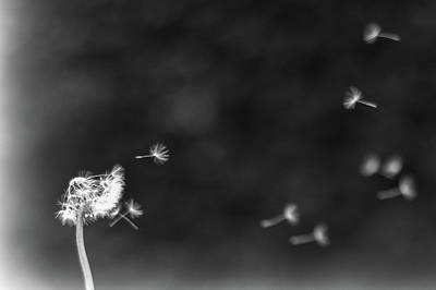 Photograph - Off To Pastures New by Ian Thompson