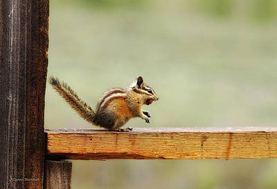 Photograph - Off To The Nut House by Donna Blackhall