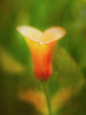 Photograph - Offering. by Usha Peddamatham