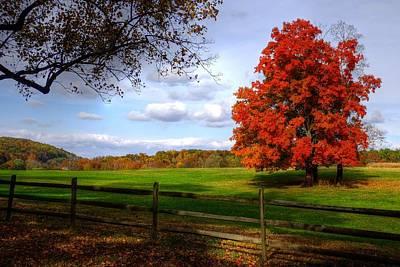 Photograph - Oh Beautiful Tree by Ronda Ryan