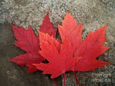 Photograph - Oh Canada by Reb Frost