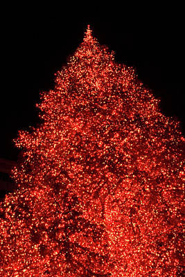 Photograph - Oh Christmas Tree by Bonnie Follett