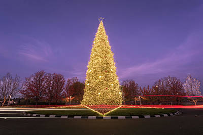 Photograph - Oh, Christmas Tree by Laura Macky