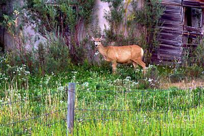 Photograph - Oh Deer by Susan Warren