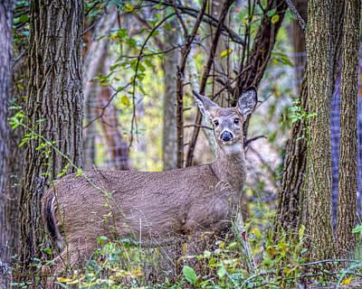 Photograph - Oh Deer by LeeAnn McLaneGoetz McLaneGoetzStudioLLCcom