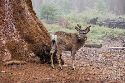 Photograph - Oh Deer by Peggy Hughes