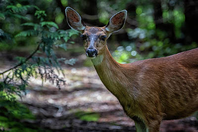 Photograph - Oh Deer by Randy Hall