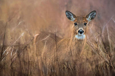 Print featuring the photograph Oh Deer by Robin-Lee Vieira