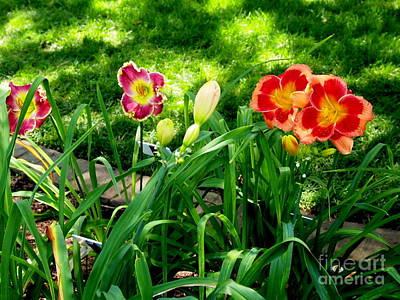 Photograph - Oh Happy Day Lilies by Nancy Kane Chapman