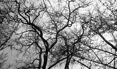 Photograph - Oh How I Love Your Lines by Teri Schuster