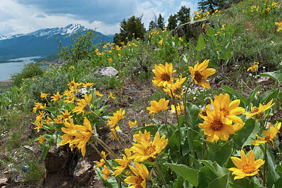 Photograph - Oh Lovely Colorado by Cascade Colors