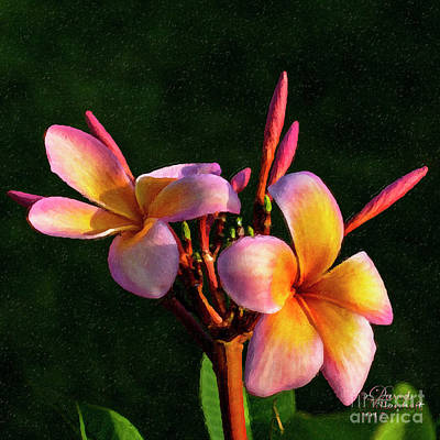 Mixed Media - Oh My Pink Plumeria by David Millenheft
