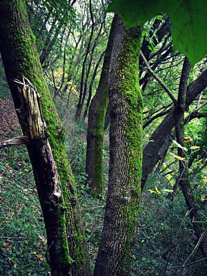 Photograph - Oh So Green by Cyryn Fyrcyd