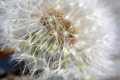 Photograph - Oh.. So Many Wishes by Brenda Bostic
