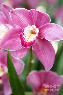 Oh So Orchid Art Print