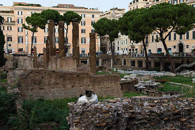 Photograph - Oh So Rome - Cats Umbrella Pines And Ancient Ruins by Georgia Mizuleva